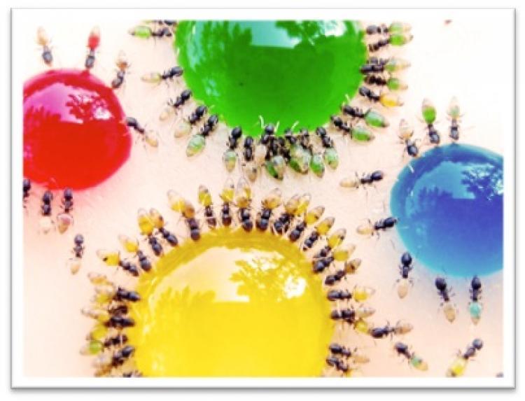 Controle de Pragas em Minas Gerais e BH,limpeza e Higieniza��o de Caixa D �gua,Dedetiza��o,Desinsetiza��o,Desratiza��o,Pombos,Desentupimento, Caixa de Gordura,Escorpi�o,Ratos,Cupim,Desratiza��o,Dedetizadora em MG, NR 18, NR33, NR35, Aceitamos Cart�o
