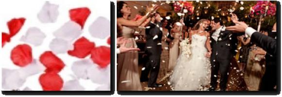 PACOTE DE 1 KG DE PÉTALAS,fogos indor, fogos para eventos, sparkles para casamentos, neve artificial, jet co2, bolinha de sabao, gerbs , cascata , fogos para reveillon, show pirotecnico, pirotecnia, MAQUINA NEVE, FROOZEN, FOGOS DE ARTIFICIOS, PIROMUSICAL, FOGUETE, FOGOS, ACIONADOR