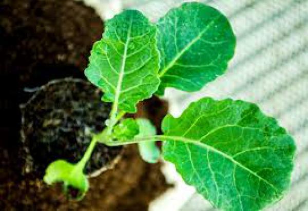 floricultura eco flora, floricultura bh,  flora em bh, orquídeas bh, plantas em bh, paisagismo em bh, decoraçao em bh, vasos decorativos em bh, couve em bh, floricultura eco flora, floricultura bh,  flora em bh, orquideas bh, plantas em bh, paisagismo em bh, substrato em bh, vaso resina bh,vasos decorativos em bh, ECO FLORA FLORICULTURA E JARDINAGEM LTDA