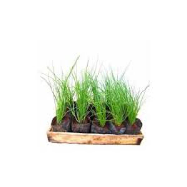 floricultura eco flora, floricultura bh,  flora em bh, orquídeas bh, plantas em bh, paisagismo em bh, decoraçao em bh, vasos decorativos em bh, cebolinha em bh, floricultura eco flora, floricultura bh,  flora em bh, orquideas bh, plantas em bh, paisagismo em bh, substrato em bh, vaso resina bh,vasos decorativos em bh, ECO FLORA FLORICULTURA E JARDINAGEM LTDA