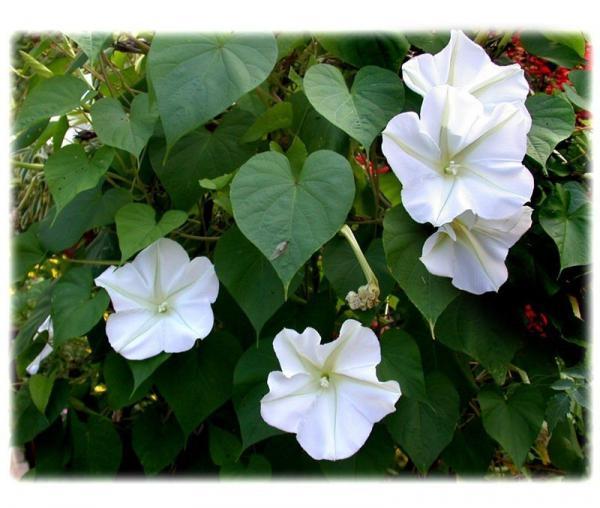 floricultura eco flora, floricultura bh,  flora em bh, orquídeas bh, plantas em bh, paisagismo em bh, decoraçao em bh, vasos decorativos em bh, trepadeiras em bh,, dama da noite em bh, floricultura eco flora, floricultura bh,  flora em bh, orquideas bh, plantas em bh, paisagismo em bh, substrato em bh, vaso resina bh,vasos decorativos em bh, ECO FLORA FLORICULTURA E JARDINAGEM LTDA