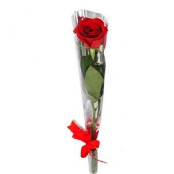floricultura eco flora, floricultura bh,  flora em bh, orquídeas bh, plantas em bh, paisagismo em bh, decoraçao em bh, vasos decorativos em bh, bacia orquídea em bh, rosa em bh, floricultura eco flora, floricultura bh,  flora em bh, orquideas bh, plantas em bh, paisagismo em bh, substrato em bh, vaso resina bh,vasos decorativos em bh, ECO FLORA FLORICULTURA E JARDINAGEM LTDA