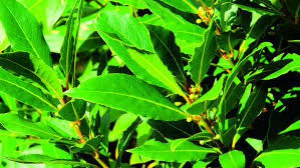 floricultura eco flora, floricultura bh,  flora em bh, orquídeas bh, plantas em bh, paisagismo em bh, decoraçao em bh, vasos decorativos em bh, calandiva em bh, presente em bh, planta pendente em bh, árvore de fruta em bh, ,