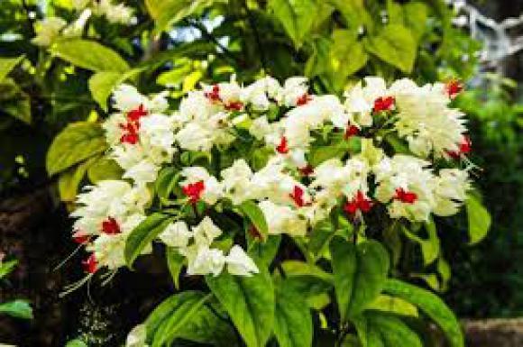 floricultura eco flora, floricultura bh,  flora em bh, orquídeas bh, plantas em bh, paisagismo em bh, decoraçao em bh, vasos decorativos em bh, lágrimas de Cristo em bh, floricultura eco flora, floricultura bh,  flora em bh, orquideas bh, plantas em bh, paisagismo em bh, substrato em bh, vaso resina bh,vasos decorativos em bh, ECO FLORA FLORICULTURA E JARDINAGEM LTDA