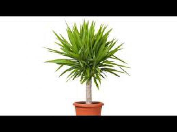 floricultura eco flora, floricultura bh,  flora em bh, orquídeas bh, plantas em bh, paisagismo em bh, decoraçao em bh, vasos decorativos em bh, calandiva em bh, presente em bh, planta pendente em bh, planta de sol pleno em bh ,