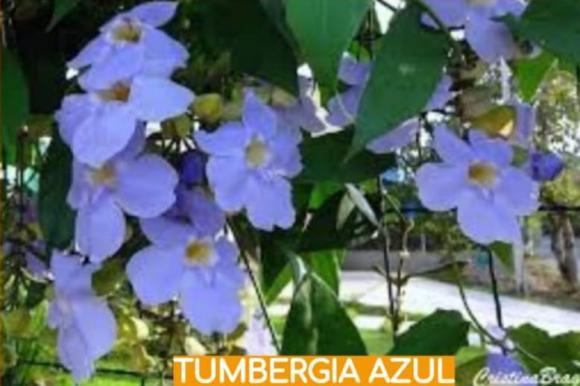 floricultura eco flora, floricultura bh,  flora em bh, orquídeas bh, plantas em bh, paisagismo em bh, decoraçao em bh, vasos decorativos em bh, balsamo em bh, tumbergia azul em bh, floricultura eco flora, floricultura bh,  flora em bh, orquideas bh, plantas em bh, paisagismo em bh, substrato em bh, vaso resina bh,vasos decorativos em bh, ECO FLORA FLORICULTURA E JARDINAGEM LTDA