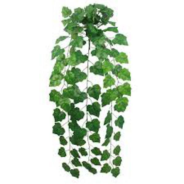 floricultura eco flora, floricultura bh,  flora em bh, orquídeas bh, plantas em bh, paisagismo em bh, decoraçao em bh, vasos decorativos em bh, arvores em bh, planta pendente emera estrela bh, h, floricultura eco flora, floricultura bh,  flora em bh, orquideas bh, plantas em bh, paisagismo em bh, substrato em bh, vaso resina bh,vasos decorativos em bh, ECO FLORA FLORICULTURA E JARDINAGEM LTDA