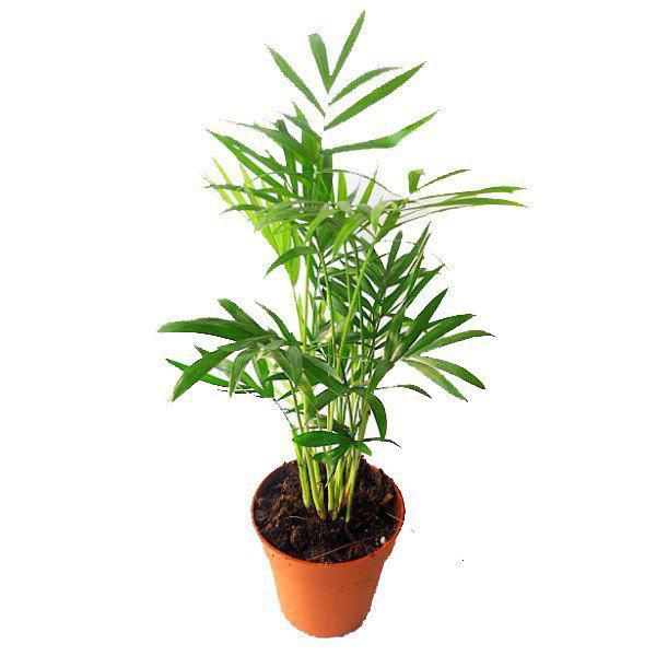 floricultura eco flora, floricultura bh,  flora em bh, orquídeas bh, plantas em bh, paisagismo em bh, decoraçao em bh, vasos decorativos em bh, ferramenta bh, PLANTA INTERIOR, floricultura eco flora, floricultura bh,  flora em bh, orquideas bh, plantas em bh, paisagismo em bh, substrato em bh, vaso resina bh,vasos decorativos em bh, ECO FLORA FLORICULTURA E JARDINAGEM LTDA