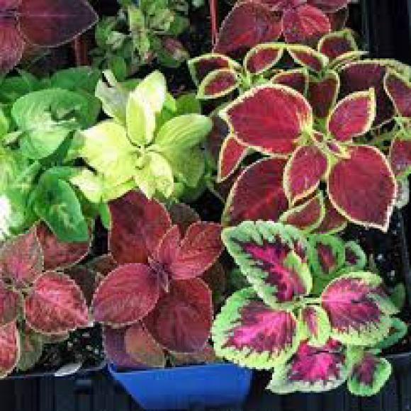 floricultura eco flora, floricultura bh,  flora em bh, orquídeas bh, plantas em bh, paisagismo em bh, decoraçao em bh, vasos decorativos em bh, coração magoado em bh, floricultura eco flora, floricultura bh,  flora em bh, orquideas bh, plantas em bh, paisagismo em bh, substrato em bh, vaso resina bh,vasos decorativos em bh, ECO FLORA FLORICULTURA E JARDINAGEM LTDA