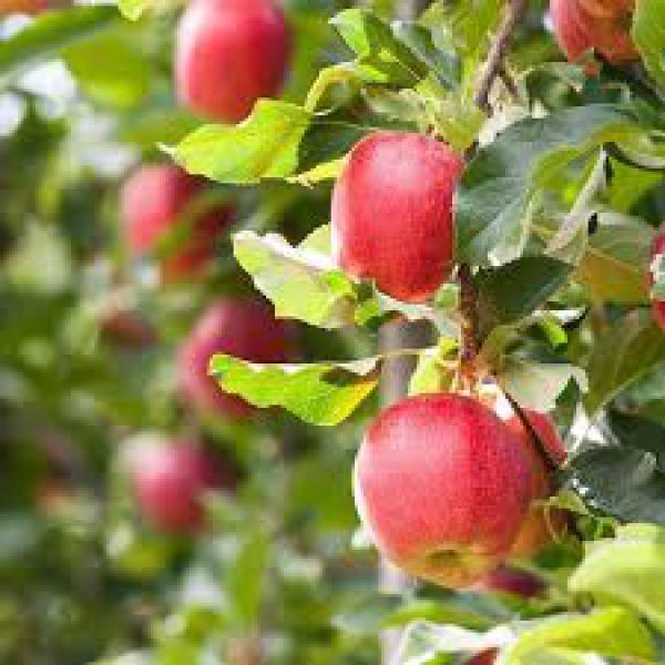 floricultura eco flora, floricultura bh,  flora em bh, orquídeas bh, plantas em bh, paisagismo em bh, decoraçao em bh, vasos decorativos em bh, calandiva em bh, presente em bh, planta pendente em bh, planta de varanda em bh, árvore de fruta em bh, floricultura eco flora, floricultura bh,  flora em bh, orquideas bh, plantas em bh, paisagismo em bh, substrato em bh, vaso resina bh,vasos decorativos em bh, ECO FLORA FLORICULTURA E JARDINAGEM LTDA