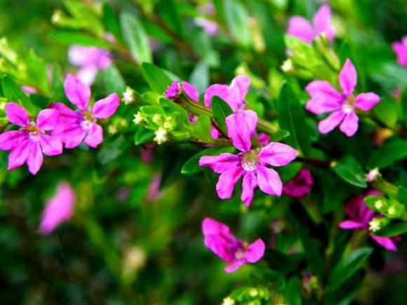 floricultura eco flora, floricultura bh,  flora em bh, orquídeas bh, plantas em bh, paisagismo em bh, decoraçao em bh, vasos decorativos em bh, quaresminho em bh, floricultura eco flora, floricultura bh,  flora em bh, orquideas bh, plantas em bh, paisagismo em bh, substrato em bh, vaso resina bh,vasos decorativos em bh, ECO FLORA FLORICULTURA E JARDINAGEM LTDA