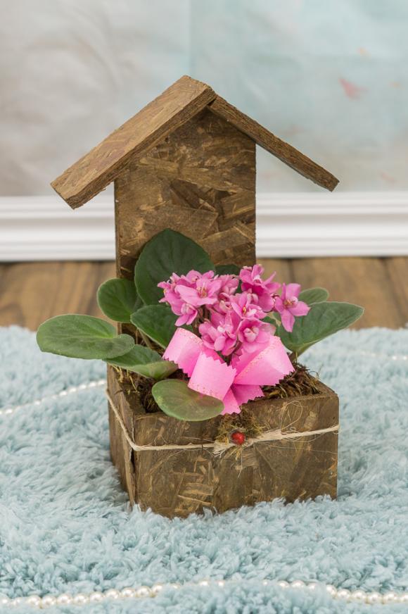 floricultura eco flora, floricultura bh,  flora em bh, orquídeas bh, plantas em bh, paisagismo em bh, decoraçao em bh, vasos decorativos em bh