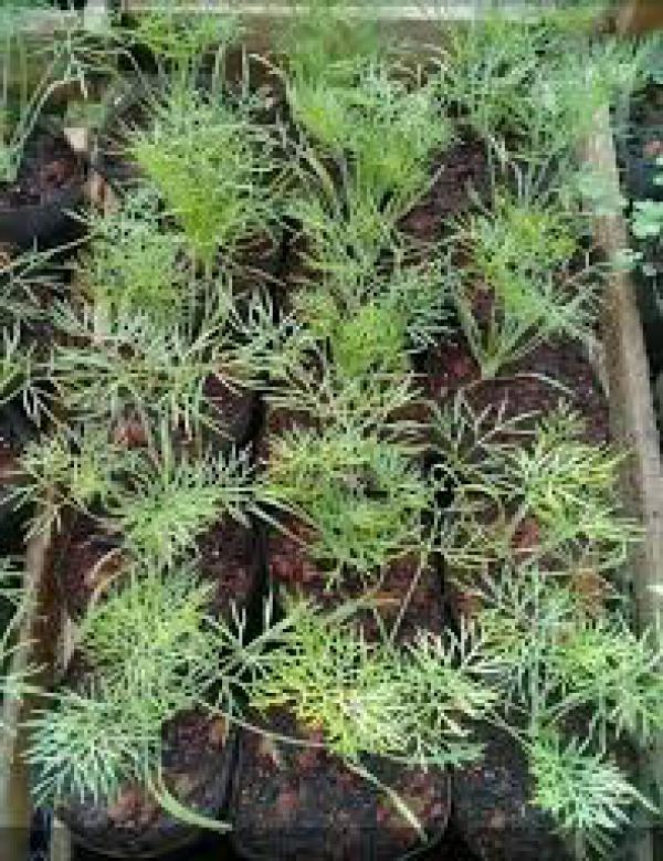 floricultura eco flora, floricultura bh,  flora em bh, orquídeas bh, plantas em bh, paisagismo em bh, decoraçao em bh, vasos decorativos em bh, funcho em bh, floricultura eco flora, floricultura bh,  flora em bh, orquideas bh, plantas em bh, paisagismo em bh, substrato em bh, vaso resina bh,vasos decorativos em bh, ECO FLORA FLORICULTURA E JARDINAGEM LTDA