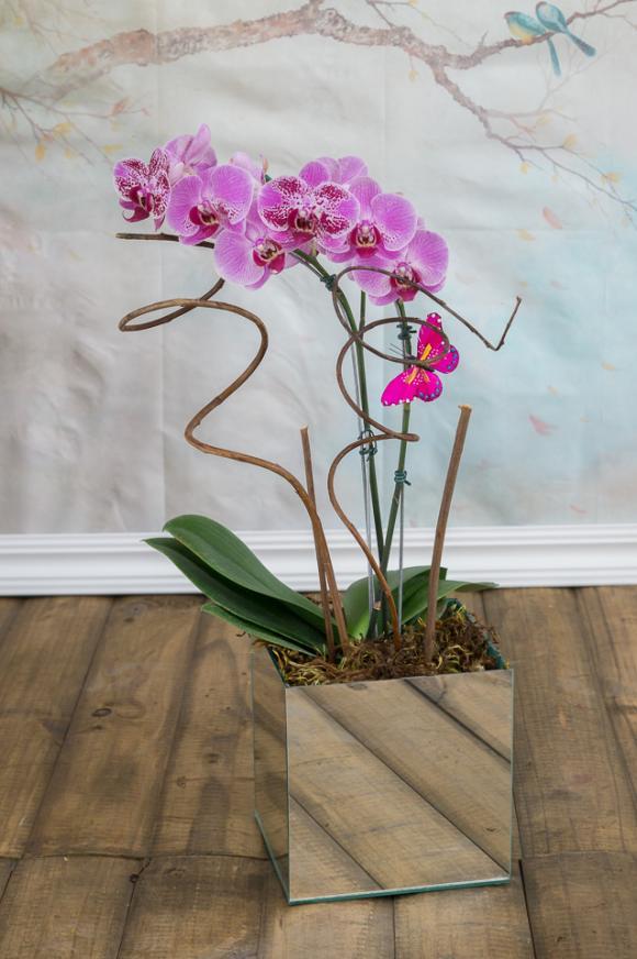 floricultura eco flora, floricultura bh,  flora em bh, orqu�deas bh, plantas em bh, paisagismo em bh, decora�ao em bh, vasos decorativos em bh