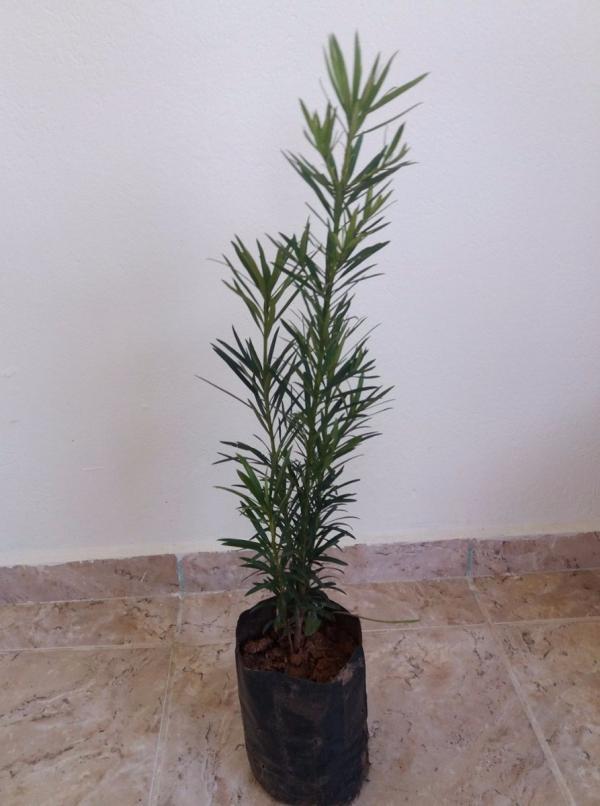floricultura eco flora, floricultura bh,  flora em bh, orquídeas bh, plantas em bh, paisagismo em bh, decoraçao em bh, vasos decorativos em bh, calandiva em bh, presente em bh, planta pendente em bh, planta de varanda em bh, floricultura eco flora, floricultura bh,  flora em bh, orquideas bh, plantas em bh, paisagismo em bh, substrato em bh, vaso resina bh,vasos decorativos em bh, ECO FLORA FLORICULTURA E JARDINAGEM LTDA