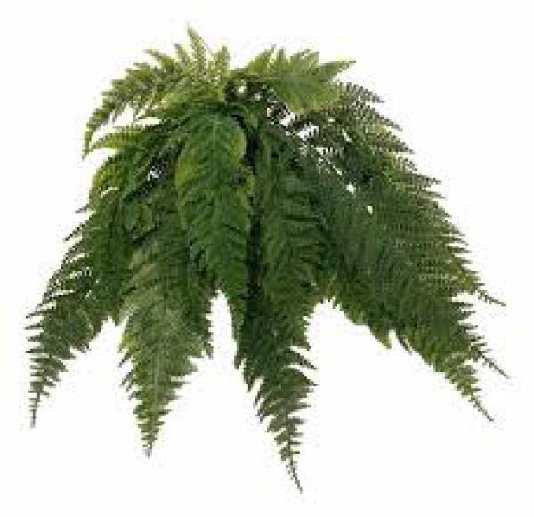 floricultura eco flora, floricultura bh,  flora em bh, orquídeas bh, plantas em bh, paisagismo em bh, decoraçao em bh, vasos decorativos em bh, arvores em bh, planta pendente em bh, floricultura eco flora, floricultura bh,  flora em bh, orquideas bh, plantas em bh, paisagismo em bh, substrato em bh, vaso resina bh,vasos decorativos em bh, ECO FLORA FLORICULTURA E JARDINAGEM LTDA