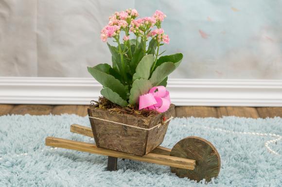 floricultura eco flora, floricultura bh,  flora em bh, orquídeas bh, plantas em bh, paisagismo em bh, decoraçao em bh, vasos decorativos em bh, floricultura eco flora, floricultura bh,  flora em bh, orquideas bh, plantas em bh, paisagismo em bh, substrato em bh, vaso resina bh,vasos decorativos em bh, ECO FLORA FLORICULTURA E JARDINAGEM LTDA