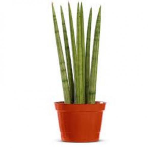 floricultura eco flora, floricultura bh,  flora em bh, orquídeas bh, plantas em bh, paisagismo em bh, decoraçao em bh, vasos decorativos em bh, lança de são jorge em bh, floricultura eco flora, floricultura bh,  flora em bh, orquideas bh, plantas em bh, paisagismo em bh, substrato em bh, vaso resina bh,vasos decorativos em bh, ECO FLORA FLORICULTURA E JARDINAGEM LTDA