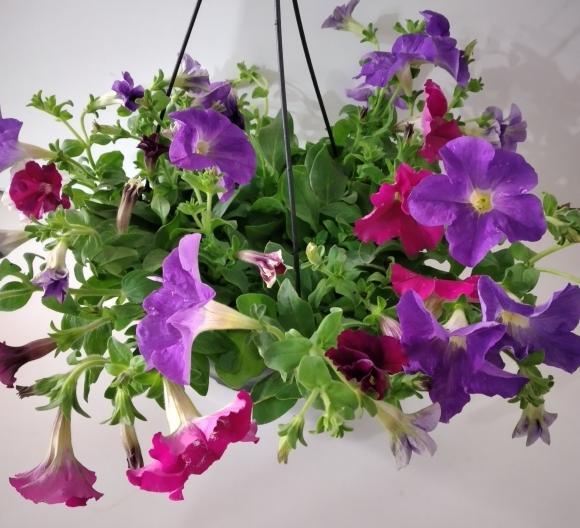 floricultura eco flora, floricultura bh,  flora em bh, orquideas bh, plantas em bh, paisagismo em bh, substrato em bh, vaso resina bh,vasos decorativos em bh, ECO FLORA FLORICULTURA E JARDINAGEM LTDA