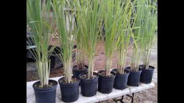 floricultura eco flora, floricultura bh,  flora em bh, orquídeas bh, plantas em bh, paisagismo em bh, decoraçao em bh, vasos decorativos em bh, citronela em bh, floricultura eco flora, floricultura bh,  flora em bh, orquideas bh, plantas em bh, paisagismo em bh, substrato em bh, vaso resina bh,vasos decorativos em bh, ECO FLORA FLORICULTURA E JARDINAGEM LTDA