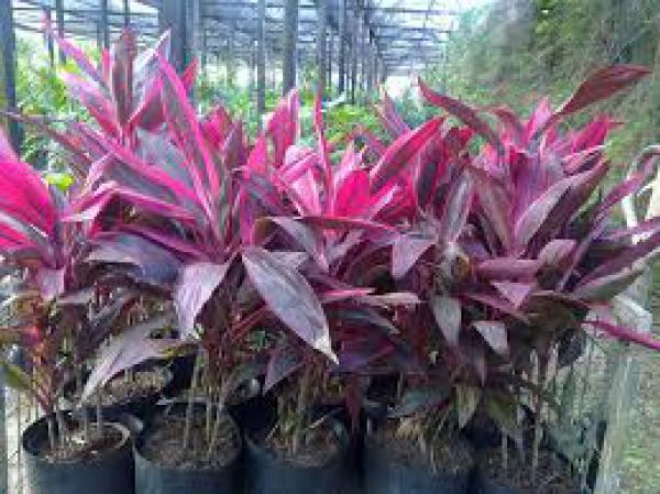 floricultura eco flora, floricultura bh,  flora em bh, orquídeas bh, plantas em bh, paisagismo em bh, decoraçao em bh, vasos decorativos em bh, calandiva em bh, presente em bh, planta pendente em bh, plantas de varanda em bh, floricultura eco flora, floricultura bh,  flora em bh, orquideas bh, plantas em bh, paisagismo em bh, substrato em bh, vaso resina bh,vasos decorativos em bh, ECO FLORA FLORICULTURA E JARDINAGEM LTDA