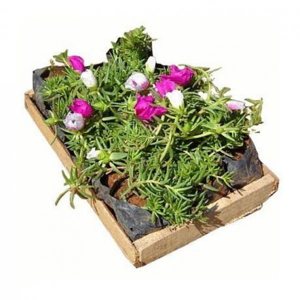 floricultura eco flora, floricultura bh,  flora em bh, orquídeas bh, plantas em bh, paisagismo em bh, decoraçao em bh, vasos decorativos em bh, singônio em bh, jardim vertical, plantas sol, onze horas ,