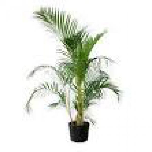 floricultura eco flora, floricultura bh,  flora em bh, orquídeas bh, plantas em bh, paisagismo em bh, decoraçao em bh, vasos decorativos em bh, palmeira em bh, floricultura eco flora, floricultura bh,  flora em bh, orquideas bh, plantas em bh, paisagismo em bh, substrato em bh, vaso resina bh,vasos decorativos em bh, ECO FLORA FLORICULTURA E JARDINAGEM LTDA