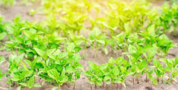 floricultura eco flora, floricultura bh,  flora em bh, orquídeas bh, plantas em bh, paisagismo em bh, decoraçao em bh, vasos decorativos em bh, pimenta veerde em bh, floricultura eco flora, floricultura bh,  flora em bh, orquideas bh, plantas em bh, paisagismo em bh, substrato em bh, vaso resina bh,vasos decorativos em bh, ECO FLORA FLORICULTURA E JARDINAGEM LTDA