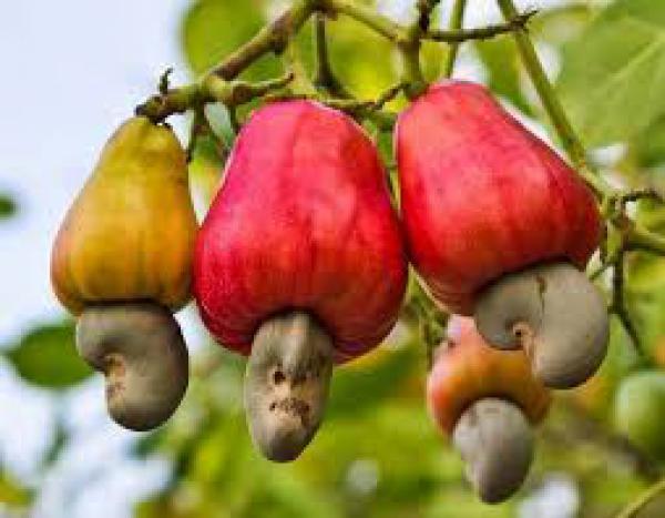 floricultura eco flora, floricultura bh,  flora em bh, orquídeas bh, plantas em bh, paisagismo em bh, decoraçao em bh, vasos decorativos em bh, calandiva em bh, presente em bh, arvore de frutas em bh , floricultura eco flora, floricultura bh,  flora em bh, orquideas bh, plantas em bh, paisagismo em bh, substrato em bh, vaso resina bh,vasos decorativos em bh, ECO FLORA FLORICULTURA E JARDINAGEM LTDA