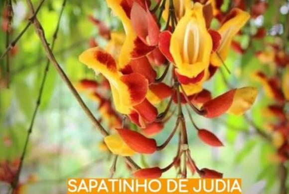 floricultura eco flora, floricultura bh,  flora em bh, orquídeas bh, plantas em bh, paisagismo em bh, decoraçao em bh, vasos decorativos em bh, calandiva em bh, begônia em bh, sapatinho de judia em bh, floricultura eco flora, floricultura bh,  flora em bh, orquideas bh, plantas em bh, paisagismo em bh, substrato em bh, vaso resina bh,vasos decorativos em bh, ECO FLORA FLORICULTURA E JARDINAGEM LTDA