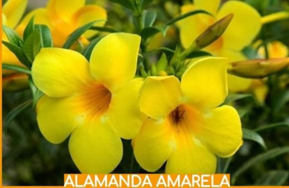 floricultura eco flora, floricultura bh,  flora em bh, orquídeas bh, plantas em bh, paisagismo em bh, decoraçao em bh, vasos decorativos em bh, balsamo em bh, alamanda amarela em bh, floricultura eco flora, floricultura bh,  flora em bh, orquideas bh, plantas em bh, paisagismo em bh, substrato em bh, vaso resina bh,vasos decorativos em bh, ECO FLORA FLORICULTURA E JARDINAGEM LTDA