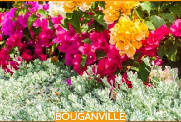 floricultura eco flora, floricultura bh,  flora em bh, orquídeas bh, plantas em bh, paisagismo em bh, decoraçao em bh, vasos decorativos em bh, calandiva em bh, begônia em bh, BOUGAINVILLE em bh, floricultura eco flora, floricultura bh,  flora em bh, orquideas bh, plantas em bh, paisagismo em bh, substrato em bh, vaso resina bh,vasos decorativos em bh, ECO FLORA FLORICULTURA E JARDINAGEM LTDA