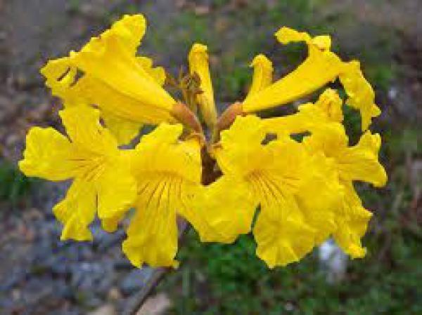 floricultura eco flora, floricultura bh,  flora em bh, orquideas bh, plantas em bh, paisagismo em bh, substrato em bh, vaso resina bh,vasos decorativos em bh