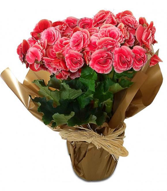 floricultura eco flora, floricultura bh,  flora em bh, orquídeas bh, plantas em bh, paisagismo em bh, decoraçao em bh, vasos decorativos em bh girassol em bh, buquês, begônia em bh, floricultura eco flora, floricultura bh,  flora em bh, orquideas bh, plantas em bh, paisagismo em bh, substrato em bh, vaso resina bh,vasos decorativos em bh, ECO FLORA FLORICULTURA E JARDINAGEM LTDA