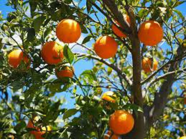 floricultura eco flora, floricultura bh,  flora em bh, orquídeas bh, plantas em bh, paisagismo em bh, decoraçao em bh, vasos decorativos em bh, calandiva em bh, presente em bh, planta pendente em bh, planta de varanda em bh, árvore de fruta em bh ,