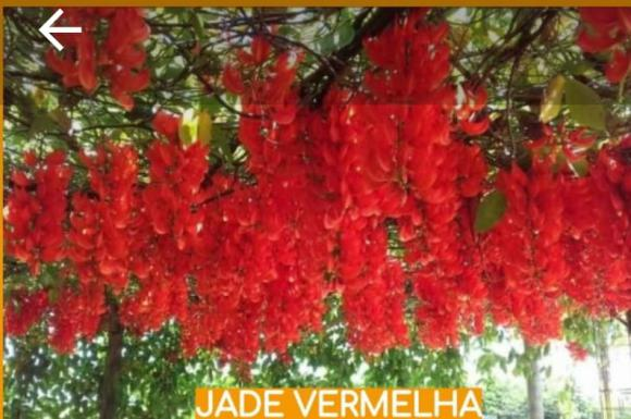 floricultura eco flora, floricultura bh,  flora em bh, orquídeas bh, plantas em bh, paisagismo em bh, decoraçao em bh, vasos decorativos em bh, trepadeiras em bh, jade vermelha em bh, floricultura eco flora, floricultura bh,  flora em bh, orquideas bh, plantas em bh, paisagismo em bh, substrato em bh, vaso resina bh,vasos decorativos em bh, ECO FLORA FLORICULTURA E JARDINAGEM LTDA