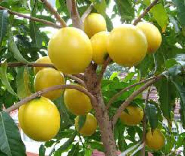 floricultura eco flora, floricultura bh,  flora em bh, orquídeas bh, plantas em bh, paisagismo em bh, decoraçao em bh, vasos decorativos em bh, calandiva em bh, presente em bh, planta pendente em bh, árvore de fruta em bh, floricultura eco flora, floricultura bh,  flora em bh, orquideas bh, plantas em bh, paisagismo em bh, substrato em bh, vaso resina bh,vasos decorativos em bh, ECO FLORA FLORICULTURA E JARDINAGEM LTDA